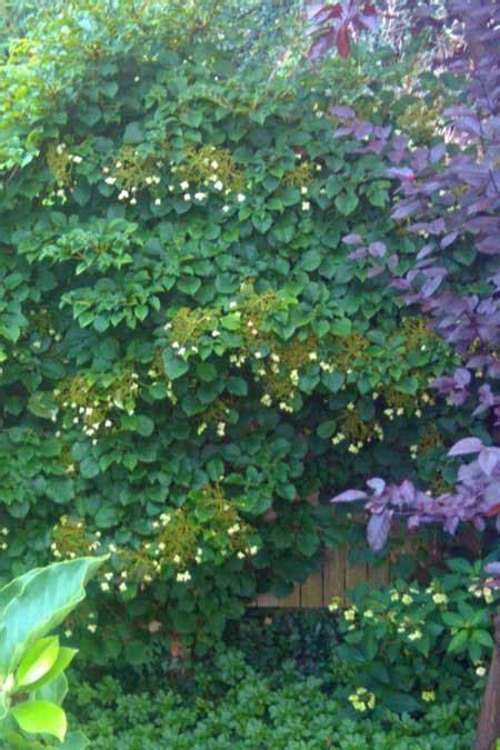 Best Hydrangea Plants