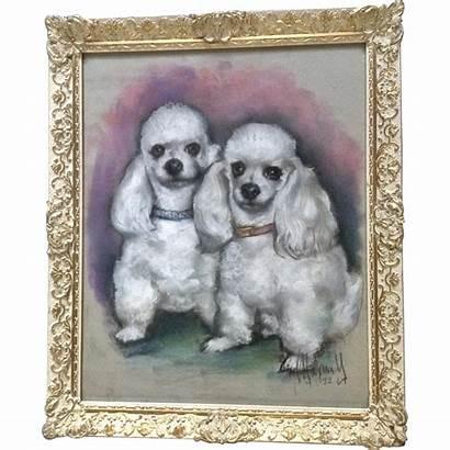 Poodle Portrait Pastel Toy Dogs Painting 1969