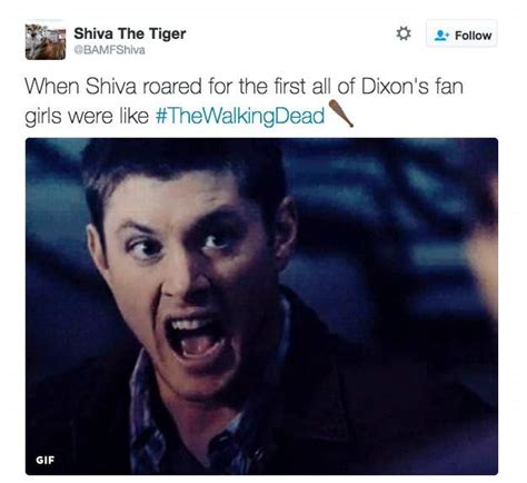 Shiva Meme - shiva on the walking dead all the memes you need to see heavy com page 7