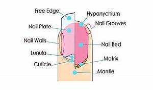 How Do Nail Hardeners And Strengtheners Work  The Best
