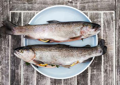 cuisiner les truites truite toutes les recettes pour cuisiner la truite arc