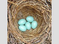 Want to keep an eye on bird nests this spring? NCPR News