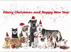 Lustige Weihnachten Hunde — Stockfoto © belchonock #118240698