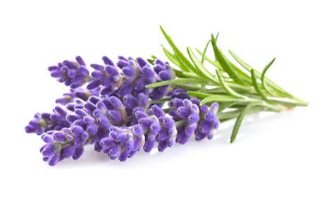 bulk candle lavender organic
