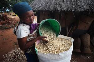 Fao News Article Un Rome Based Agencies Reveal Food