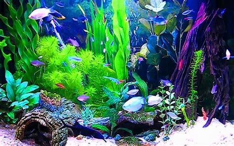 fond d ecran aquarium aquariums images aquarium fond d 233 cran hd fond d 233 cran and background photos 40193626