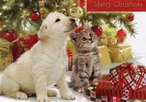 Pics For > Christmas Kittens And Puppies