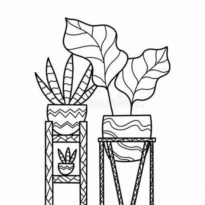 Coloring Indoor Plant Cactus Flowers Drawn Pot