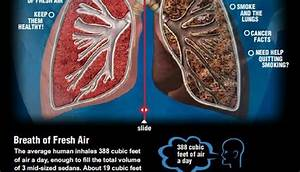 Healthy Lungs Vs  Smoker U2019s Lungs  For An Interactive