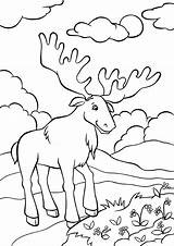Moose Coloring Animals категории из все раскраски sketch template