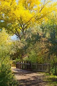 Autumn Bridge | Naturaleza | Paisajes, Camino y Fotografia ...