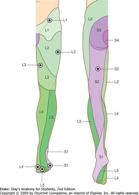 image showimagecfm  term side  card health stuff spine health sciatic nerve nervous