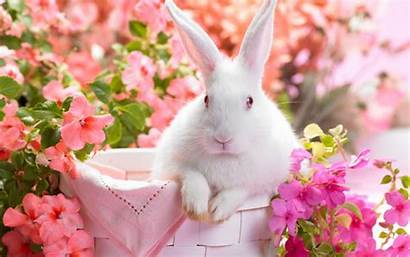 Spring Coming Bing Easter Screensavers Flowers Lila