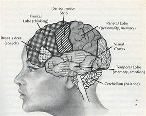 Future Minds Part I  Brain Evolution 101 For Parents And
