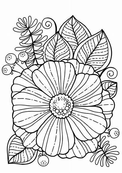 Coloring Adults Flowers Colorare Estate Adulti Fiori