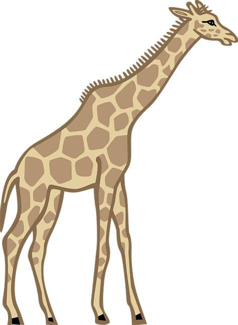 giraffe clipart drinking water cartoon giraffe drinking