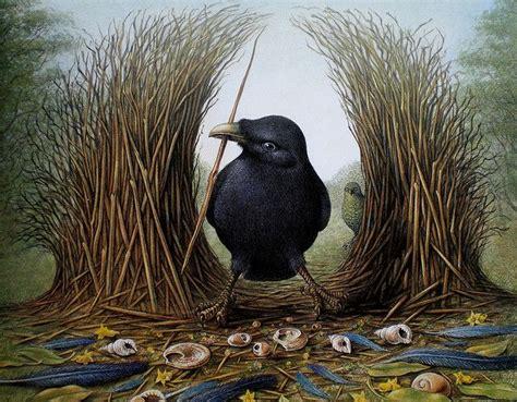 17 best images about bowerbird on pinterest passerine