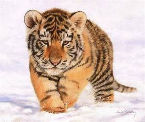 Baby Tiger enjoying the Snow | Tigers | Pinterest