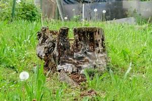 Baumstumpf Verrotten Beschleunigen : baumstumpf zum zersetzen bringen so beschleunigen sie ~ Watch28wear.com Haus und Dekorationen