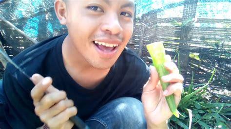 กินว่านหางจระเข้!! - YouTube