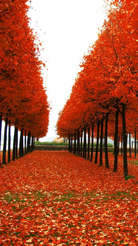 Android Hd Autumn Wallpapers by Leaves In Everywhere Best Hd Wallpapers For Iphone