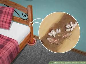 can bed bugs live in only one room 1025thepartycom With can bed bugs only be in one room