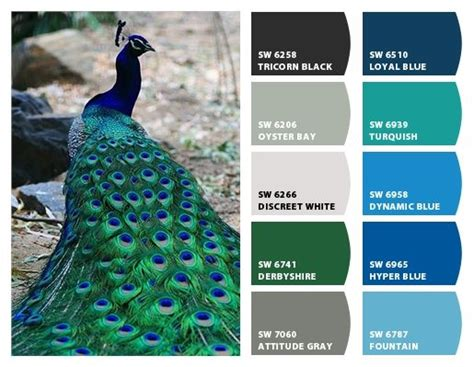 25 best ideas about peacock decor on peacock