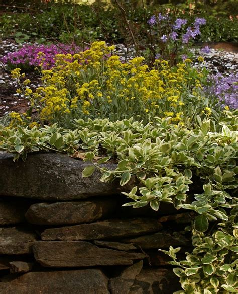 retaining wall plants pictures ideas for plants that will cascade over retaining wall new england gardening forum gardenweb
