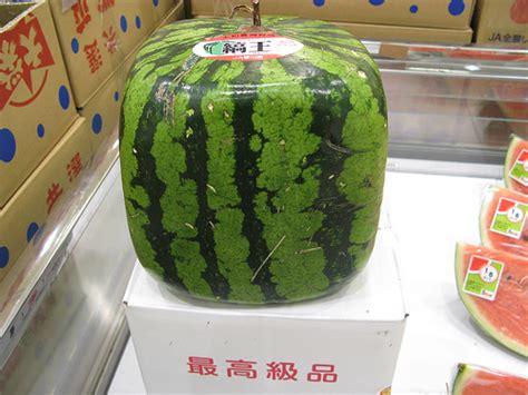 Unique Japanese Square Watermelons