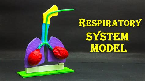 school science projects respiratory system model youtube