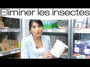 Se Débarrasser Des Guepes Maçonnes : se d barrasser des moustiques naturellement youtube ~ Carolinahurricanesstore.com Idées de Décoration