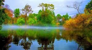Nature, Landscape, Morning, Mist, Park, Lake, Bridge