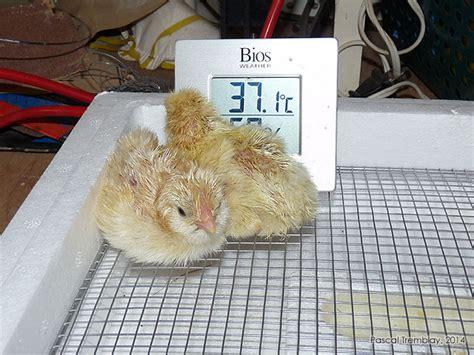 le pour couveuse poussin incubation artificielle r 233 ussir l incubation des oeufs
