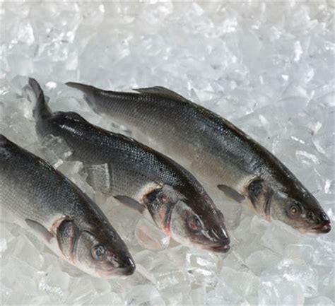 cuisiner le loup de mer loup atlantique loup de mer poissonnerie du marché