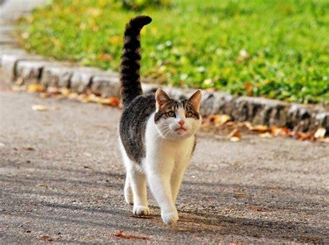 rollige katze erkennen auf diese anzeichen sollten sie achten