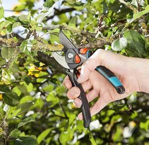 Dünger Für Zitronenbaum : der zitronenbaum pflegen schneiden sch dlinge gr nholm ~ Watch28wear.com Haus und Dekorationen
