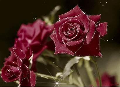 Rose Animation Decent Scraps Code Decentscraps