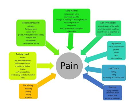 Assessing Pain In Your Cat. Storage Williamsburg Va Google Cheat Sheet Pdf. Auto Insurance In Boston Mole Removal Process. Oklahoma City Family Law Attorney. How To Correct Farsightedness. Low Electric Rates In Texas Boiler Repair Nj. Kennesaw State University Admissions. Jacksonville Weight Loss Center. How Many People Are Addicted To Alcohol