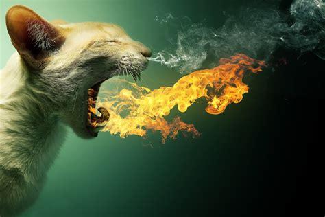 Animal Design Wallpaper - animals cat wallpapers hd desktop and mobile
