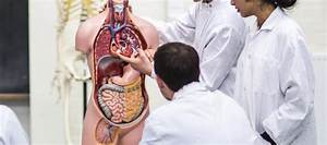Msc In Human Anatomy