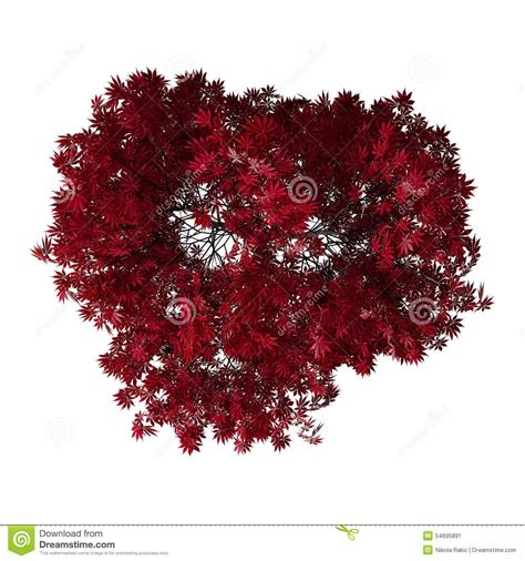 bird top view autumn red tree isolated  white stock