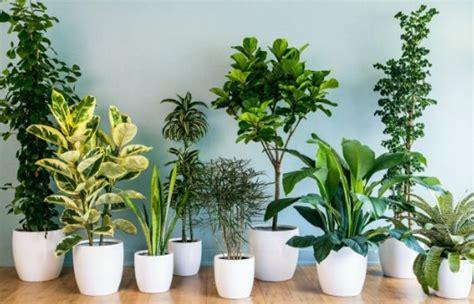 merawat tanaman hias rumah subur