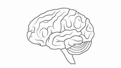 Brain Human Yoga Anatomy Brainfacts Trauma Sensitive