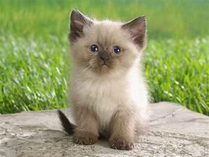 Cute Cats #3 | ... Cute Cats