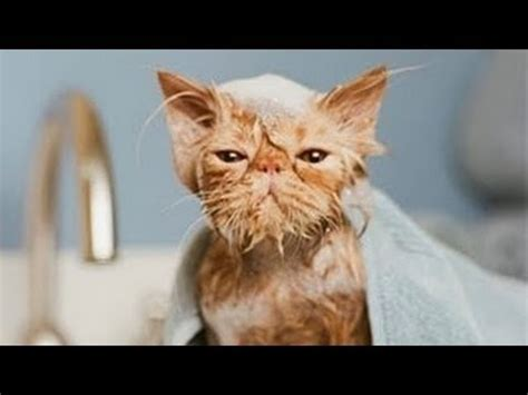 Can You Shower A Cat - best cat vines of all time compilation 2014