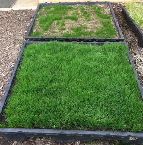 how to mulch grass organic mulch for seeding treatment soil 3