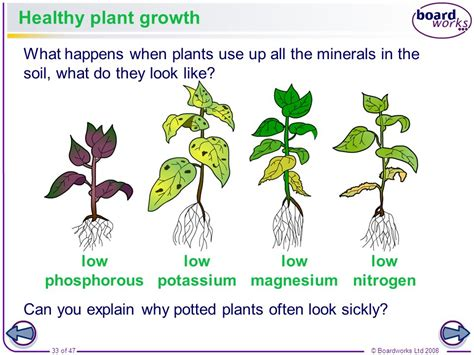 what does phosphorus do for plants plants and photosynthesis ppt video online download