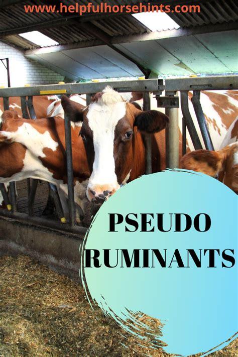 horses helpfulhorsehints digestion animals