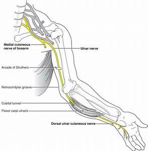 Here Are The Things You Need To Know About Ulnar Nerve