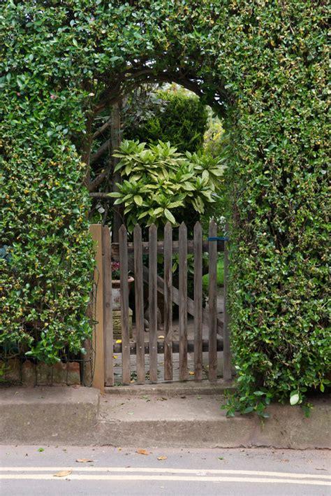 incredible garden hedge ideas   yard